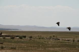 Mongoloie2007saskia 077